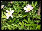 Vgx-Fleurs 14 - Fleurs inconnues
