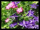 Vgx-Fleurs 15 - Fleurs inconnues