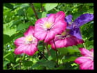 Vgx-Fleurs 16 - Fleurs inconnues