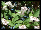 Vgx-Fleurs 20 - Bzzzzz, à table