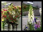 Vgx-Fleurs 27 - Roseraie et Digitales