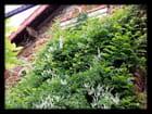 Vgx-PlantesGr 1 -  Plantes dévoreuses de façade