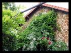 Vgx-PlantesGr 2 -  Plantes dévoreuses de façade