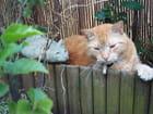 Vie de chat