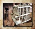 Vieille cage