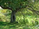 Viel arbre