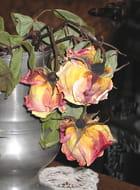 Vielles roses