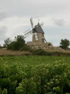 Vignes et moulin en Minervois