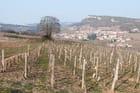 Vignes, village et roche de Solutré en Bourgogne