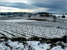 Vignoble Audois sous la neige