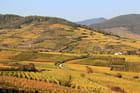 Vignoble d'Alsace