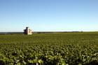 Vignoble de Vougeot en Bourgogne
