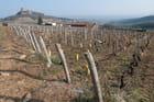 Vignoble et roche de Solutré en hiver