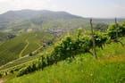 Vignoble et village de Durbach
