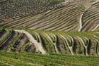 Vignobles et oliviers