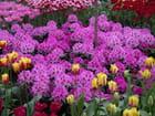 Violettes elles sons violettes