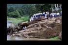 Visite au bain des éléphants