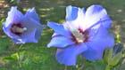 Visite au jardin