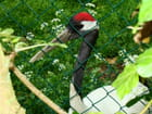 visite au zoo, grue de Mandchourie