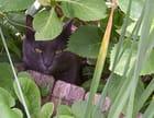 Visiteur de mon jardin