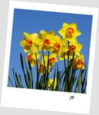 Vive le printemps...