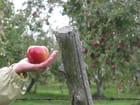 Voilà la pomme