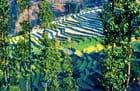 Vue sur les rizières en terrasses