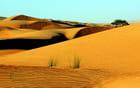 Wahiba Sands, dunes.