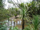 Woofing a Whangaparapara : Whooouuaaa !!!