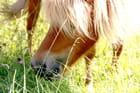 Zen le cheval