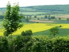 Zigzag dans les champs