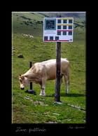 Zone pastorale.