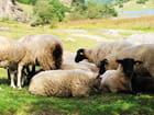 Zone pastorale du lac d'Estaing.