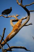Zoo de Salvador de Bahia