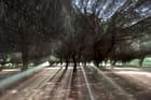 Zooming du sous bois