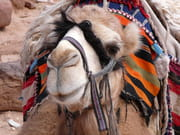 autres-animaux-petra-jordanie-1282371021-1181337