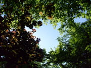 Trou dans Actualité autres-arbres-allemagne-1212174916-1204089