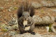 Invocations Doton Ecureuils-autres-animaux-chur-suisse-5527002216-951250