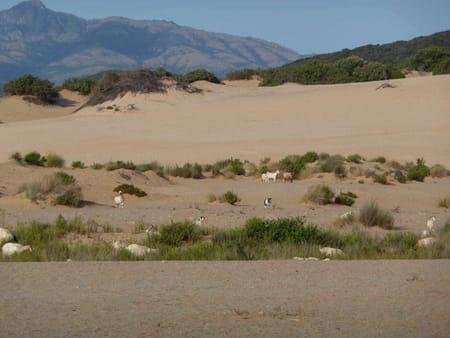 Deserto di Piscinas