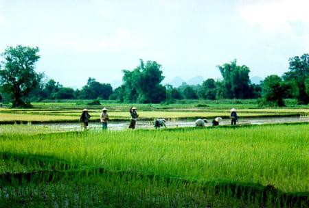 Sud et 4 000 îles du Laos