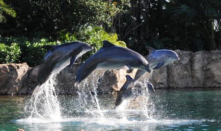 Le parc aquatique Discovery Cove