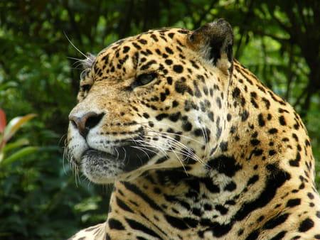 Le parc zoologique d'Amnéville