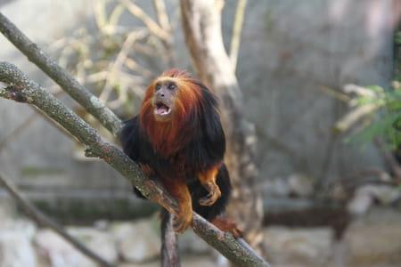 Le parc zoologique et botanique de Mulhouse