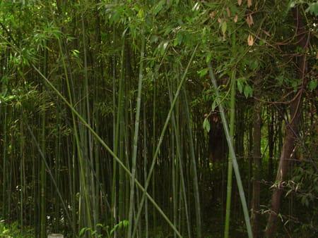 Temple des Bambous de Kunming