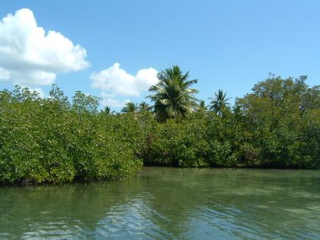 Le circuit des mangroves