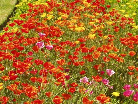 Les jardins botaniques de Kew
