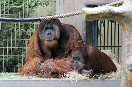 Le jardin zoologique de Bâle