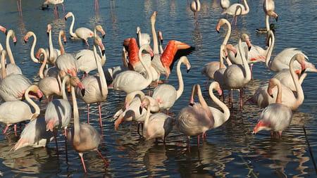 Parc ornithologique de Pont du Gau