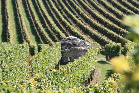 La France des vins