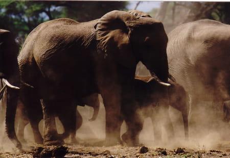 Les meilleurs safaris d'Afrique